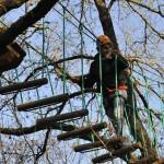 Rapolano ponte tra gli alberi